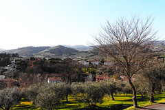 My world of colours (Francesco Carradori) Tags: tuscany italy florence poggio caiano mountain field green trees mountains firenze campagna montagne valle valley olive ulivi toscana italia countryside