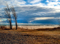 Two Trees (duaneschermerhorn) Tags: cobourg beach ontario lake water sand trees winter sky clouds blue colors colorful wind silent lakeontario baretree leafless barebranches