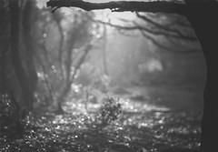 The Pathway (i-r-paulus) Tags: filmisnotdead film blackandwhite blackandwhitefilm fomapan fomapan100 35mmfilm carenarlens dartmoor path bokeh bokehlicious dof depthoffield morning light sunrise