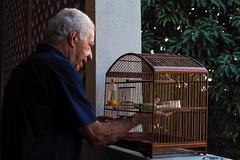 Bird Cage (AdrianoSetimo) Tags: gaiola cage portrait retrato bird oldman velho olympusomdem10mkii olympusmzuikodigitaled1240mmf28pro olympus1240mm underexposed subexposição em10mkii