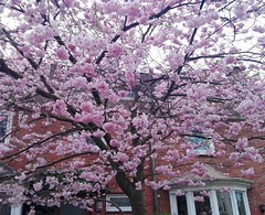 Si merezo primavera, si merezco primavera, si :P (Greñitas) Tags: instagramapp square squareformat iphoneography uploaded:by=instagram
