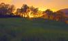 The light (* landscape photographer *) Tags: light sunset italy tree verde green nature alberi europe flickr tramonto valle natura valley sa nikkor luce paesaggio raggi lucania 2015 nikond90 landscapephotographer sinni salvyitaly pietrapica