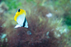 20150829-DSC_9393.jpg (d3_plus) Tags: sea sky fish beach japan scenery underwater diving snorkeling  shizuoka    apnea izu j4  waterproofcase    skindiving minamiizu       nikon1 hirizo  1030mm  nakagi 1  nikon1j4 1nikkorvr1030mmf3556pdzoom beachhirizo misakafishingport  1030mmpd nikonwpn3 wpn3