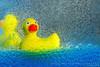 Ducks in the Tub by Kaye Menner (Kaye Menner) Tags: blue boy red water girl yellow kids children fun toy shower photography bath child ducks bubbles spray splash bathtime rubberduck rubberducks showercurtain yellowblue rubberduckies bathtoy blueyellow childstoy yellowduck yellowducks redbeak girlart artforchildren boyart lotsofbubbles bubblesintheair bubbleseverywhere bubblesonwater bubblesinwater kayemennerphotography kayemenner ducksinthetub kayemennerbubblesart