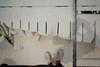 Tagli, Cava di tufo attiva, Montescaglioso, Luglio 2015 (Chiara Caroli) Tags: dettagli matera architettura cava tufo tagli materiale