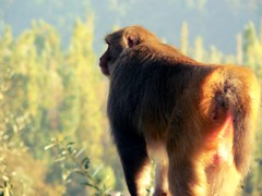 Monkey Friend (daiyaan.db) Tags: nature animals monkey wildlife kashmir