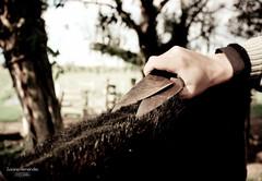 'O toso...' (Suzana Fernandes Fotografia) Tags: santa horse rio de caballo grande do sheep ar maria natureza pasto patas da campo mate rs poncho livre reflexo cavalo paraiso so pretoebranco jos sul pampa tesoura chimarro vaca pala campanha boi mangueira gaucho gacha chapu campestre cintura faca prenda aude bota lao aguiar fimdetarde fronteira ovelha gacho tradio faixa pordesol tosa gado peo esporas porteira esquila prateada dilermando coxilha ovelheiro maneia campeiro porteirinha terneiros pampeiro tesouraamartelo