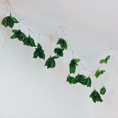 Basil (ge-org) Tags: plant green spice harvest basil