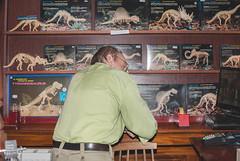 From Genesis (você vai me matar) Tags: mammoth tyrannosaurus brontosaurus dimetrodon styracosaurus brachiosaurus