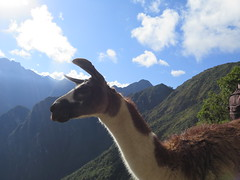 "Machu Picchu <a style=""margin-left:10px; font-size:0.8em;"" href=""http://www.flickr.com/photos/83080376@N03/21575552426/"" target=""_blank"">@flickr</a>"