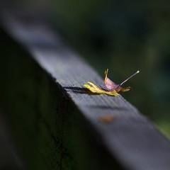 Autumn Fence (Amble180) Tags: fence happy 9 olympus jupiter friday em5