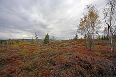 Siggerud (uzetterlund) Tags: autumn sweden blueberry höst värmland fryken nilsby