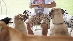 DSC02928 (agorayebm) Tags: dog bordercollie dalmatian fila crick dlmata filabrasileiro
