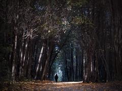 into the autumn light (marianna_a.) Tags: autumn light man fall leaves silhouette forest dark walking person woods ominous foliage cedar stalking montrealbotanicalgarden mariannaarmata