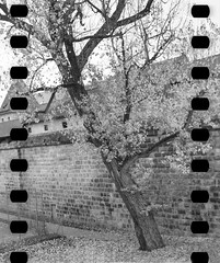 Kodak-V2-500T_Tmax-Dev_FujiFilm-ga645zi_20151115_0007 (Zaoliang Luo) Tags: kodak 119 xprocessing tmaxdeveloper vision2 fujifilmga645 500t 1045min