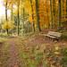 Waldweg II - forest track II