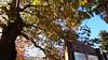 Μετσοβο Ελλαδα P1150746 (omirou56) Tags: 169 ελλαδα χωριο δεντρο ελλασ ουρανοσ φθινοπωρο σκιεσ φυλλα μετσοβο panasoniclumixdmctz40