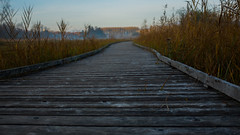 Way (Alex_Berto) Tags: nature marais chemin champpittet