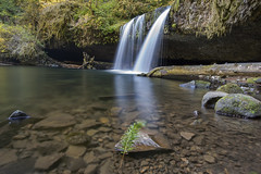 Butte Creek Falls (TiffPippinPhotography) Tags: fern water oregon forest waterfall waterfalls buttecreek scottmills buttecreekfalls
