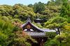 Pagode en arrière plan (StephanExposE) Tags: japon japan asia asie stephanexpose kyoto arbre nature sanctuaire temple tree canon 600d 1635mm 1635mmf28liiusm