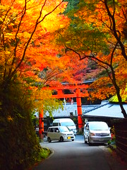exploring new roads :) (brisa estelar) Tags: road way otori maple leaves trees yellow green orange colourful foliage cars traditional kyoto japan beauty asia travel outdoor