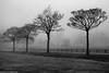 Heath Park and Runcorn Hill (3 of 8) (andyyoung37) Tags: heathpark runcorn silhouette uk cheshire fog tree england unitedkingdom gb