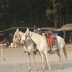 Trip to Murud-Janjira fort (36)