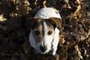 Rizzo (Naiade Photography) Tags: 2016 europa inverno italia monza parcodimonza stagioni sun winter rizzo jackrussell terrier jrt pinklady