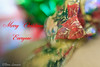 100X 2016 - 97/100 - Photos with the Lensbaby (norasphotos4u) Tags: 100x2016 canon6d christmas lensbaby macro social ©noraleonard 100xthe2016edition image97100