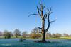 Dead Tree at Ickworth (johnboy!) Tags: ickworthpark ickworthhouse ickworth deadtrees nationaltrust
