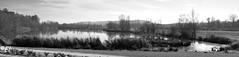 """Lac Pélissier (Brigitte .. . """"Tatie Clic"""") Tags: 201701072 hiver janvier lac eau leau auborddeleau paysage reflets panorama refletsdansleau brume panoramique parcnaturelagengaronne lotetgaronne aquitaine francesudouest monochrome noiretblanc nb"""