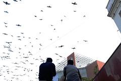 Their Twitter Feed (Mayank Austen Soofi) Tags: delhi walla sky birds twitter tsunami subway connaught place