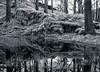 IR - reflecting stillness (Bright Sparrow) Tags: olympus hoya72 ir infrared clappersagate tarn reflection trees moss stillness serenity