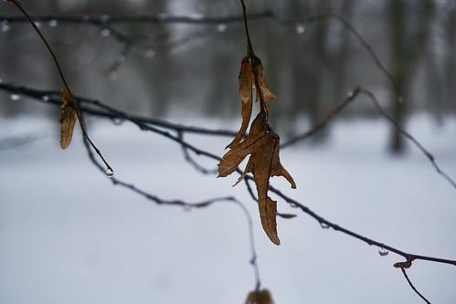 Totes Blatt im Winter