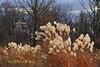 "MAGIC HOUR Landscape (1 of 3) in Late Autumn/Fall at Duke Farms of Hillsborough NJ (takegoro) Tags: ""duke farms"" ""nature preserve"" nature hillsborough ""new jersey"" fall autumn landscape meadow grass native ""magic hour"" ""golden sunset orange"