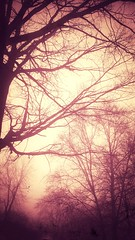 A photo I took after the leaves fell. #trees #fog #autumn #winter #bare (opaltears / orchidbones) Tags: trees winter bare autumn fog