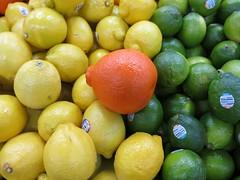 Winter Colours - Citrus 018/365 (Pushapoze (nmp)) Tags: citrus agrumes lemon citron lime orange