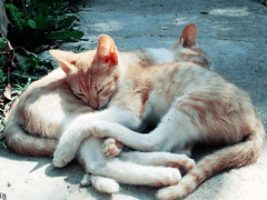 Cat 16 @specialcatsedition (Robert Krstevski) Tags: robertkrstevski robertkrstevskiblogspotcom cat cats catsphotography specialcatsedition catlovers catsedition pet pets petlovers gato gatos gata gatti кошка котка кошки котки la chatte kitty kitten kittens kitties cute cuteness мачка