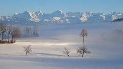 misty mountains (antje p.) Tags: winter switzerland berneroberland trees snow white fog mist