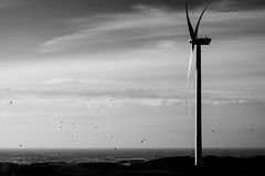 Wind power (John fae Fife) Tags: fujifilmx noiretblanc xe2 monochrome netherlands bw éolienne nb blackandwhite windturbine