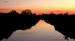 Entre deux (Dominique Dumont Willette) Tags: miroir eau marais camargue paca lessaintesmariesdelamer soleil couchant rose mauve silhouettes nature arbres arbustes parcnaturel