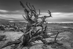 Grace in Death (Bill Bowman) Tags: junipersnag bestsnagonearth canyonlandsnationalpark utah thankfullyfederalland islandinthesky coloradoplateau