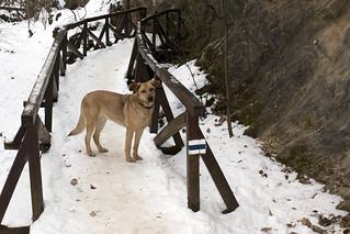 Dog on the hiking bridge