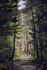 Trees in Finnsjön lake (Giuseppe Moschetti.) Tags: giuseppe moschetti nikon d810 sweden winter cold trees finnsjön zeiss milvus 135mm apo sonnar aposonnart2135 zf2 carlzeiss