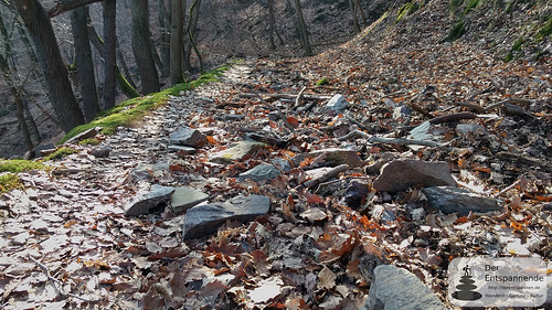 Holpriger Weg im Binger Wald