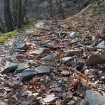 Holpriger Weg im Binger Wald thumbnail