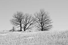 (Flavio Calcagnini) Tags: alberi trees paesaggio landscape black white bianco nero italia italy piacenza travo val trebbia pietra parcellara bobbio flavio calcagnini photography