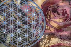 Life and death - Leben und Tod (HMM !) (ralfkai41) Tags: symbol madeofmetal macromondays metal metall rose macro makro blume blumedeslebens flower floweroflife
