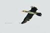 Cormorant / Aalscholver (Phalacrocorax carbo) (Levina de Ruijter) Tags: tree amsterdam birds animals canon cormorants nederland thenetherlands vogels boom dieren waterland ijdoorn aalscholvers canon1dmarkiin kenko14xtc canonef400mmf56lusm levinaderuijter