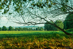 Dresden, Elbwiesen (ptrckH) Tags: trees summer sky nature field clouds river germany de landscape deutschland dresden ast branch riverside outdoor sommer saxony natur feld himmel wolken samsung shore sachsen fluss ste altstadt landschaft bume elbe friedrichstadt elbufer nx500